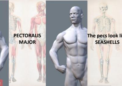 Online Anatomy Workshop for Teens