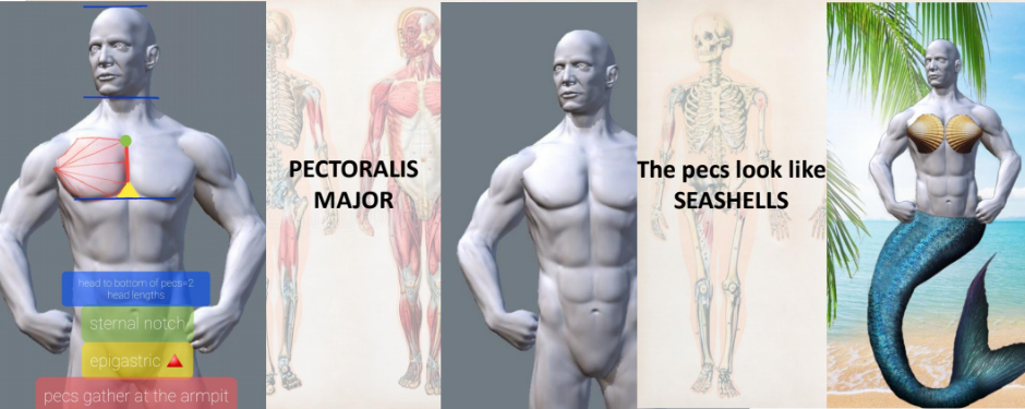 Online Anatomy Workshop for Teens